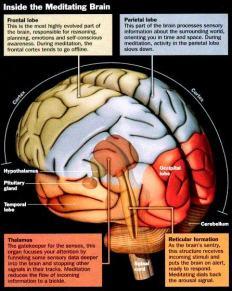 meditating-brain.jpg